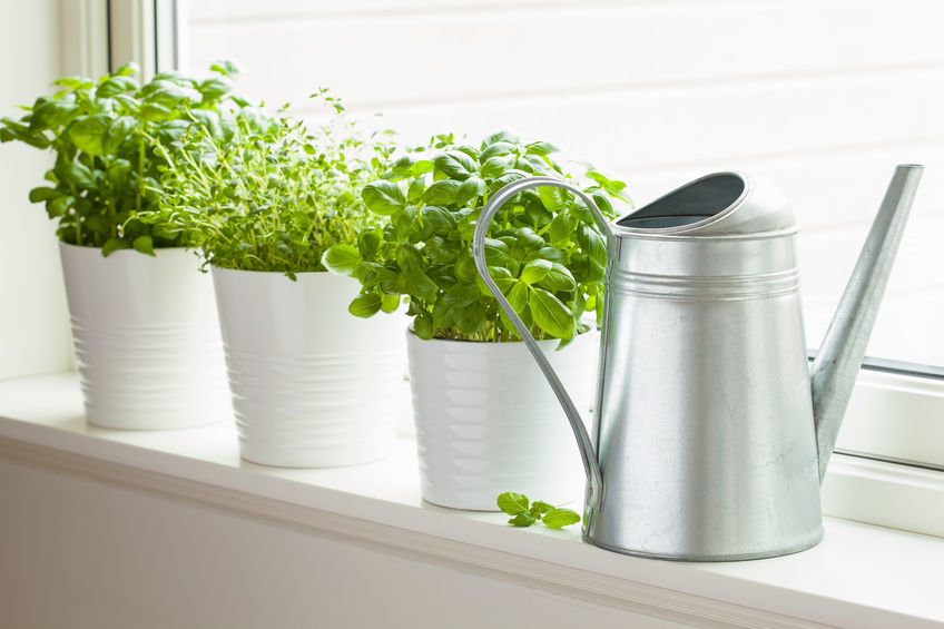 Make Your Own Apartment Herb Garden