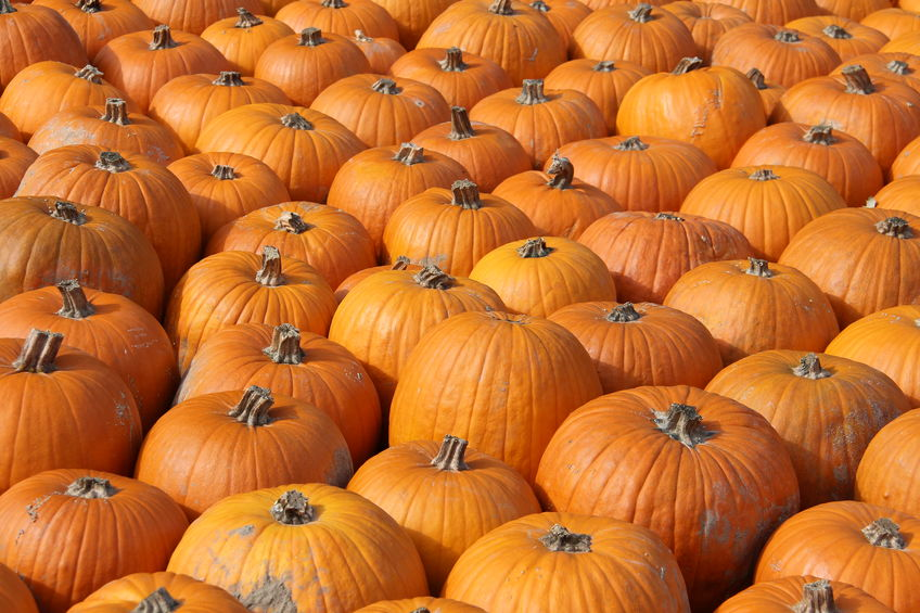Pumpkin: Everything You Need to Know About Fall's Hottest Food